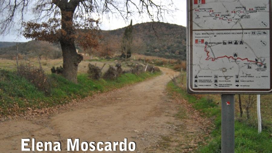 MOSCARDO_ESTERNA